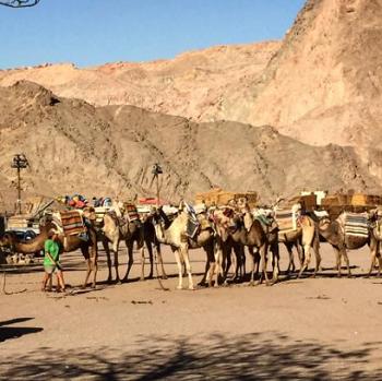 camel's ranch eilat.png
