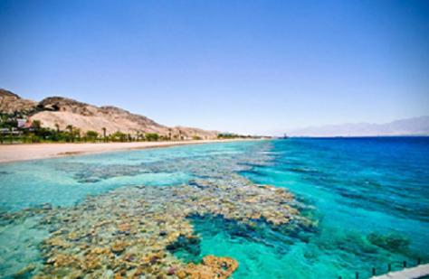 coral reef eilat.png